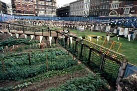 Photo:Community garden with vegetables